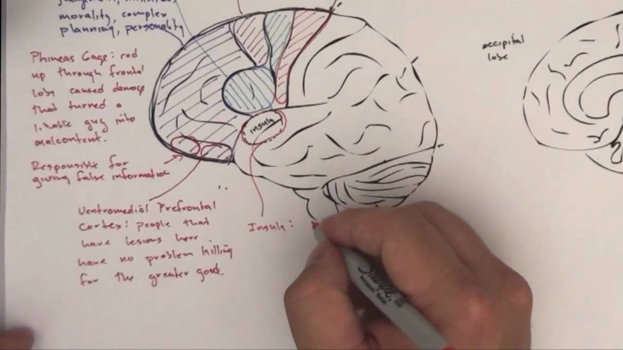 Part 2: Functional Brain Areas
