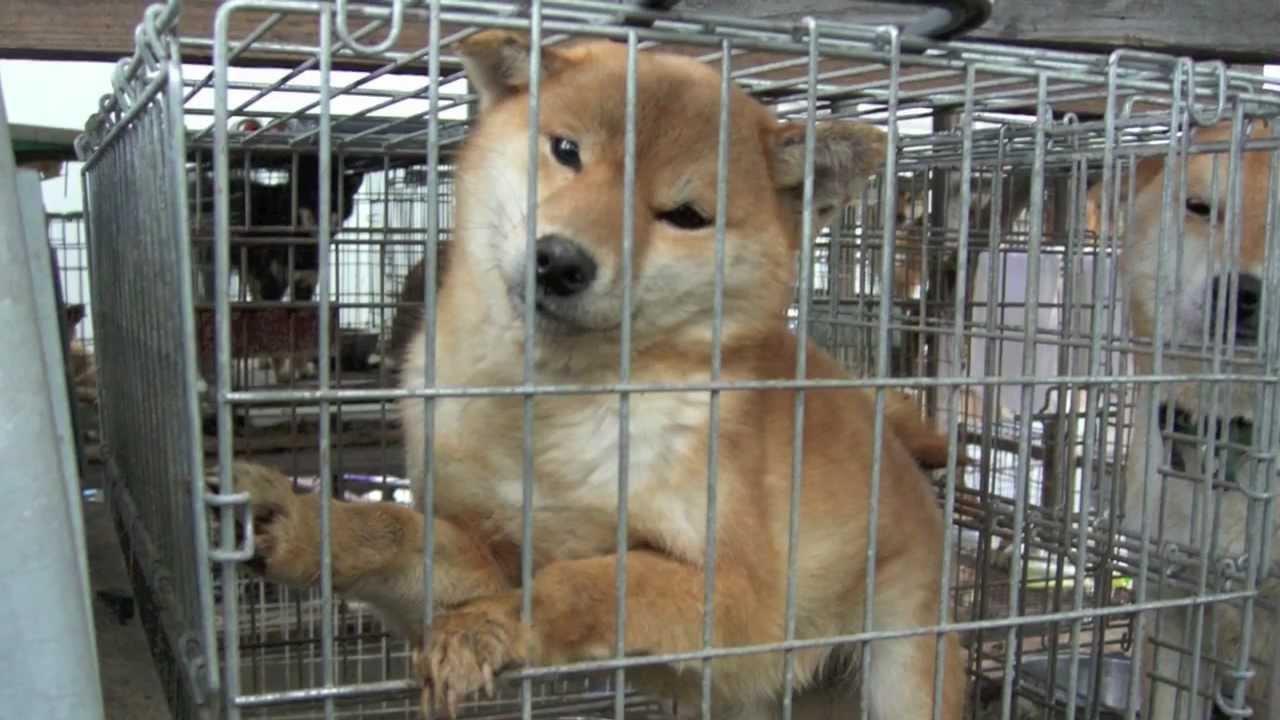 Puppy Mill Breeder Dogs