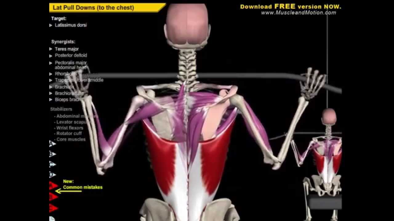 Anatomy Of Spine Spinal Extension Exercise Analysis 2015 Youtube