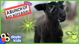 The Baddest Animals Who Ever Lived In The Whole World | 45 Minutes Of Bad Boys and Girls | Dodo Kids