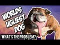 World's Ugliest Dog 2018: funny or tragic? (rant)