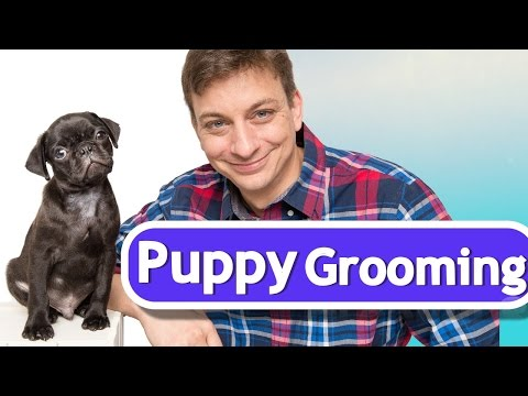 How to Train your Puppy to Like Being Brushed