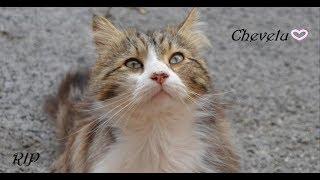 CHEVELU chat massacré à Draguignan.