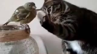 кошка и птица