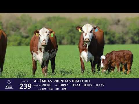 LOTE 239 - TAT H097, H123, H189 e H279