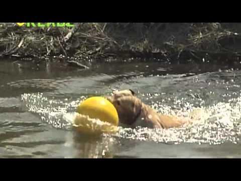 Kerbl Spielball Gelb bei tiierisch.de