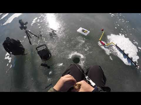 MULTI SPECIES ICE FISHING! - NEW Humminbird Flasher!