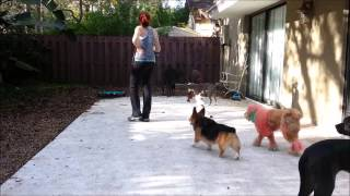 Fear Aggressive Dog Socialization - Take The Lead K9 Training