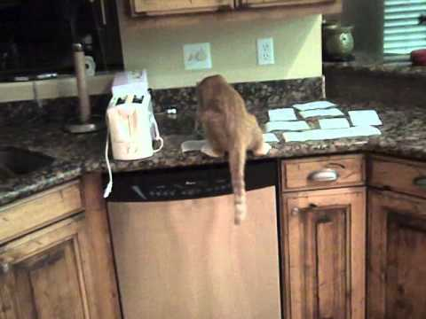 How To Keep A Cat From Jumping On The Counter