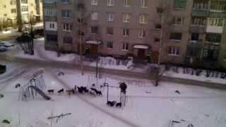 Собаки на детской площадке - зверствуют!