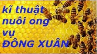 kĩ thuật nuôi ong nội vụ Đông - Xuân ở miền Bắc . KS Ngô Đắc Thắng