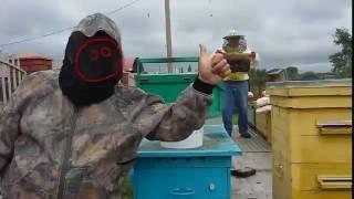 Собираем майский мед.(Тимашевск 04.06.2016., 2016-06-10T05:31:03.000Z)