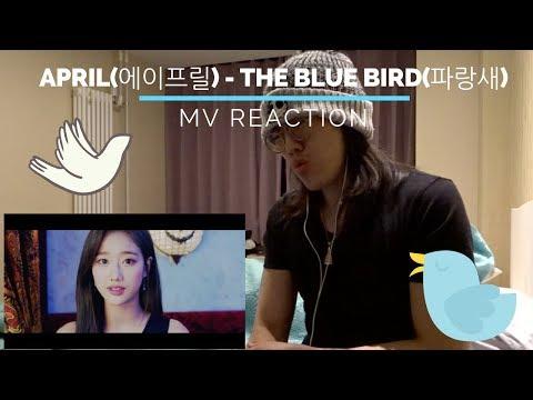 TMF (AAA) reacts to APRIL(에이프릴) - The Blue Bird(파랑새) [MV]
