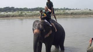 Download Video Elephant bathing: Sauraha, Chitwan, Nepal MP3 3GP MP4