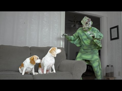 Dogs Have Fun with Swamp Creature: Cute Dogs Maymo & Penny