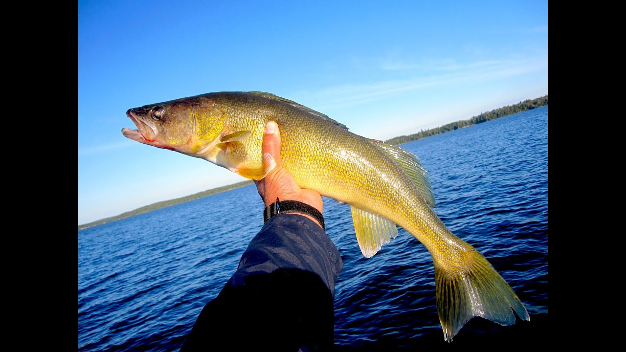 Lac seul boat and shore walleye youtube for Lac seul fishing report