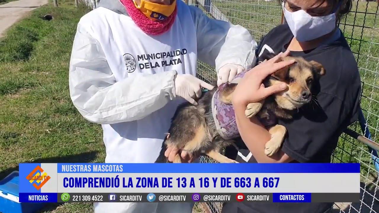 Vacunan mascotas casa por casa