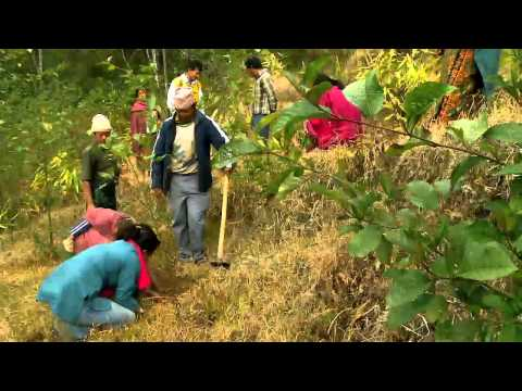 earthrise - Nepal's Forest Future
