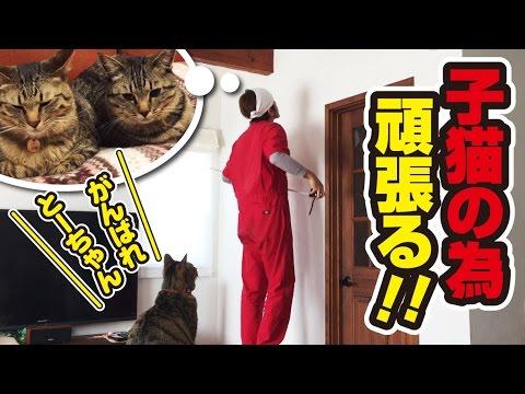 子猫たちのために朝からDIY!~Building a catwalk for kittens!~
