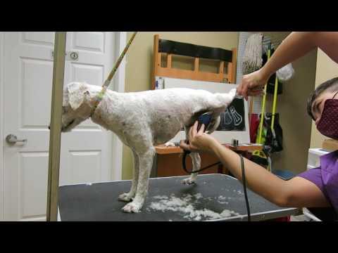 Winnie Matted Dog Groom Video 4 of 4