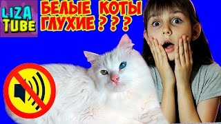 Наш КОТ ГЛУХОЙ??? Проверяем слух нашего кота Гоги LizaTube