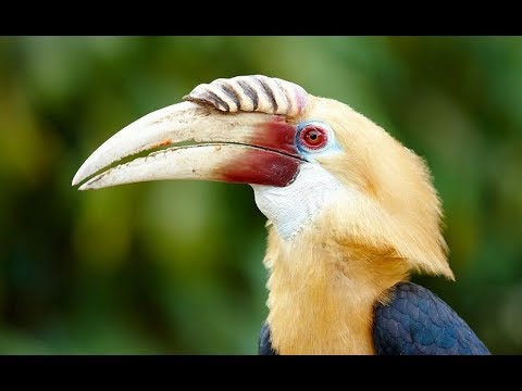 Papua New Guinea Nature & Wildlife - Fight for Survival (Nat Geo Wild)