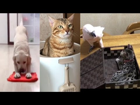 Pet animals funny video /  pet animals playing videos / cat dog playing video /new funny prank video
