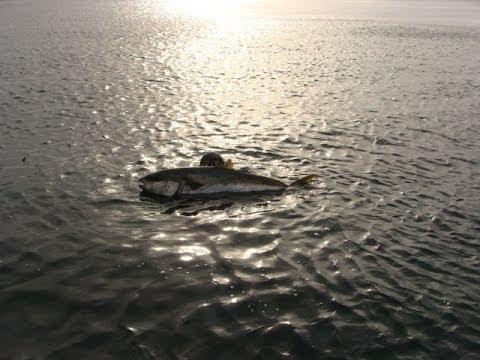Aventuras submarinas en Baja California Sur