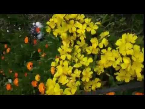 Na lúčke kvetnatej