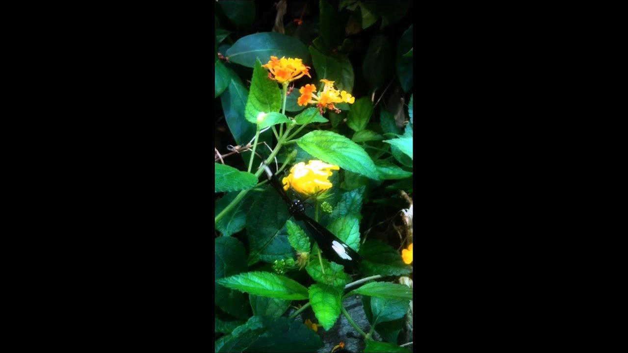 IPhone MOS Butterfly Garden   Boston