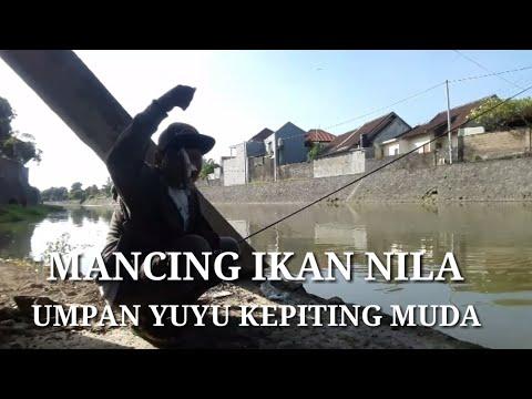 MANCING IKAN NILA UMPAN YUYU/KEPITING MUDA