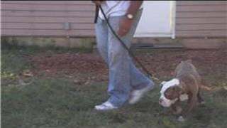 Dog Training & Care : Leash Training for Puppies
