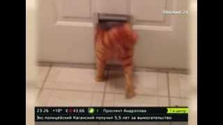 """Толстый кот """"Гарфилд"""" покоряет интернет"""