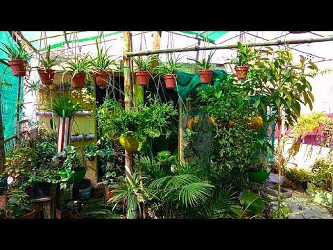 Ab Mera Garden Ban Raha Hai Ik Vegetable Garden  Summer Ka Cool Plan