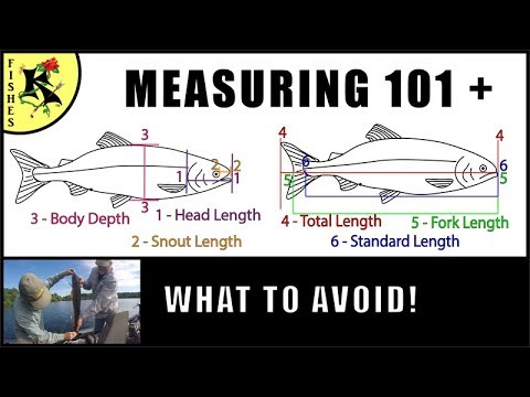 Fishing Helper: How To Measure A Fish (most Fishes) | Koaw Nature Lesson 5