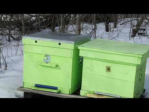 14 февраля 2020 года. Первый облет пчел. Полетели пчелки. На душе Весна!