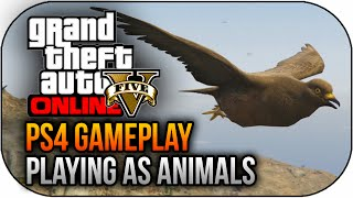 GTA 5 PS4 Next Gen - How To Play As Animals Gameplay Easter Egg Peyote Locations (GTA 5 Next Gen)