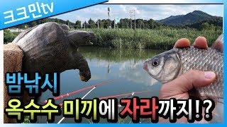 River carp night fishing (turtles)