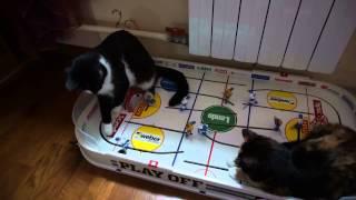 Кошки играют в хоккей