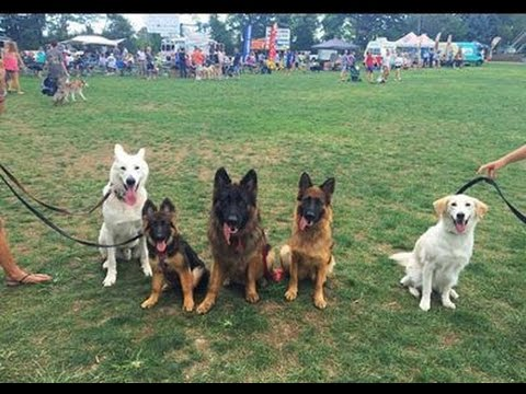 Dog festival in New Jersey with Augusto The Dog Trainer