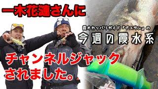 一木花漣さんにチャンネルジャックされました『霞オカッパリガイド・アユサンの今週の霞水系』