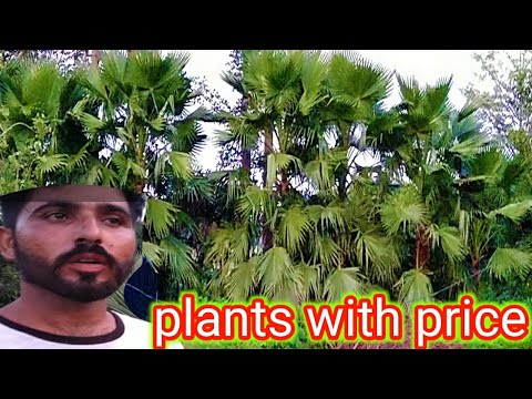 Plants With Price || Pattoki Nurseries