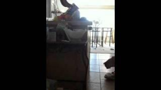 Biggie Steals Loaf Bread