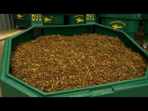 The Chestnut Horse Feeds Bulk Bin Feeding System