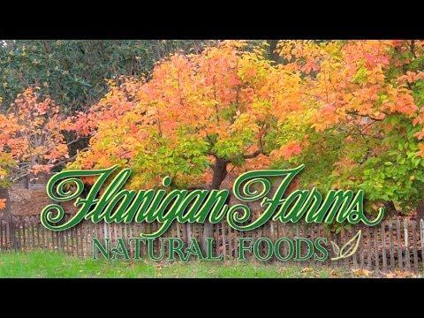 Flanigan Farms - GMO Free Premium Sunflower Seeds