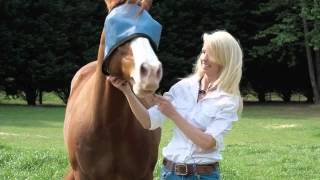 Sue Gray & Nag Horse Ranch- Sun Related Products