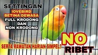 Download lagu Settingan dan rawatan lb betina dewasa FULL Krodong dan FULL Ablak Durasi selalu Nambah Panjang?