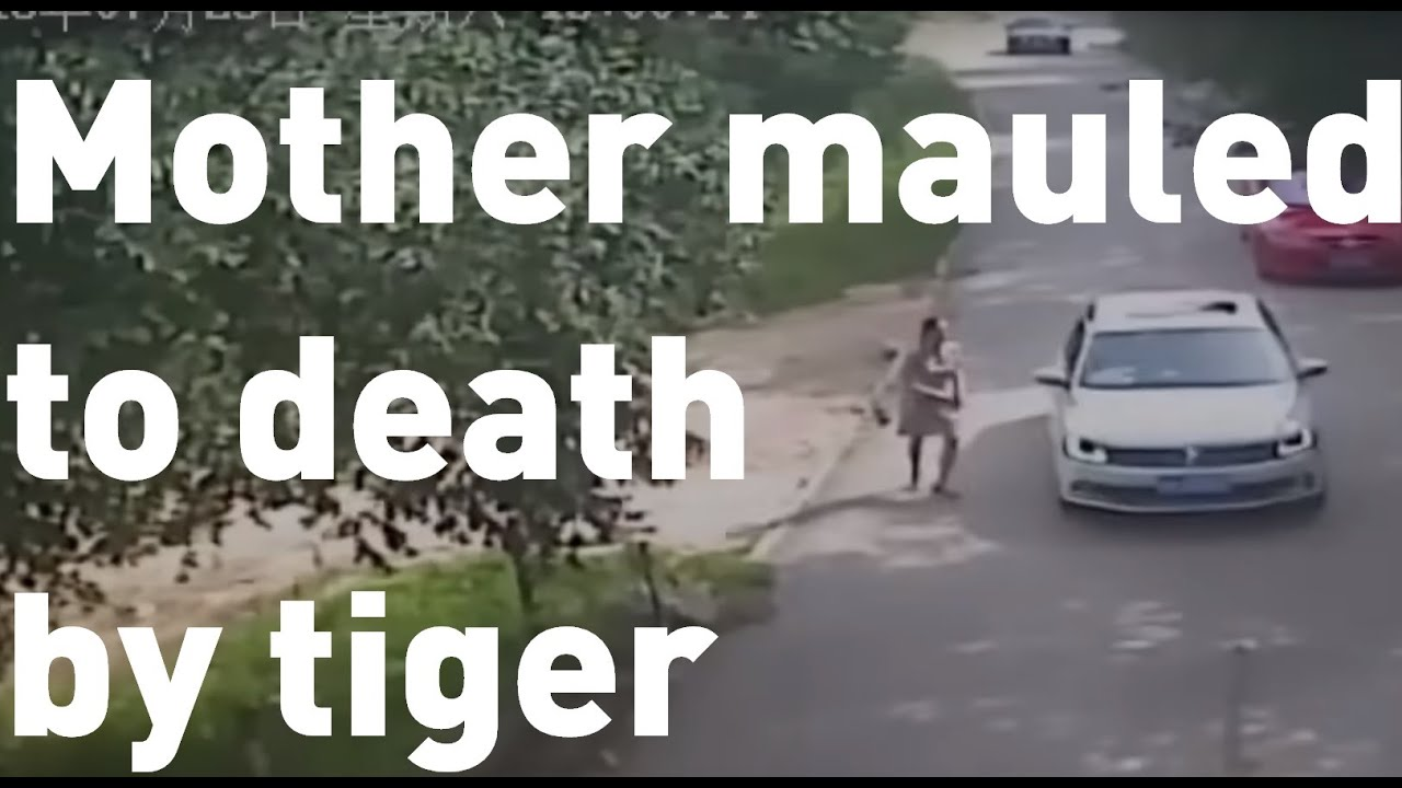 Mother mauled to death trying to save daughter from a tiger