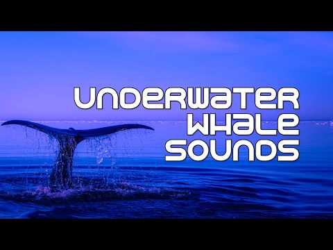 Alaska Underwater Whale Sounds | 1 HOUR | Sleep, relax, study