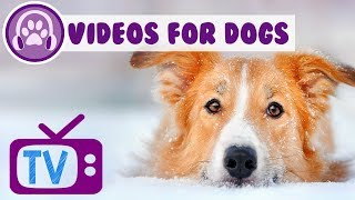 The BEST Videos for Dogs to Watch - Chill Out Music Therapy for Pets - Dog Entertainment (2018)  ✅